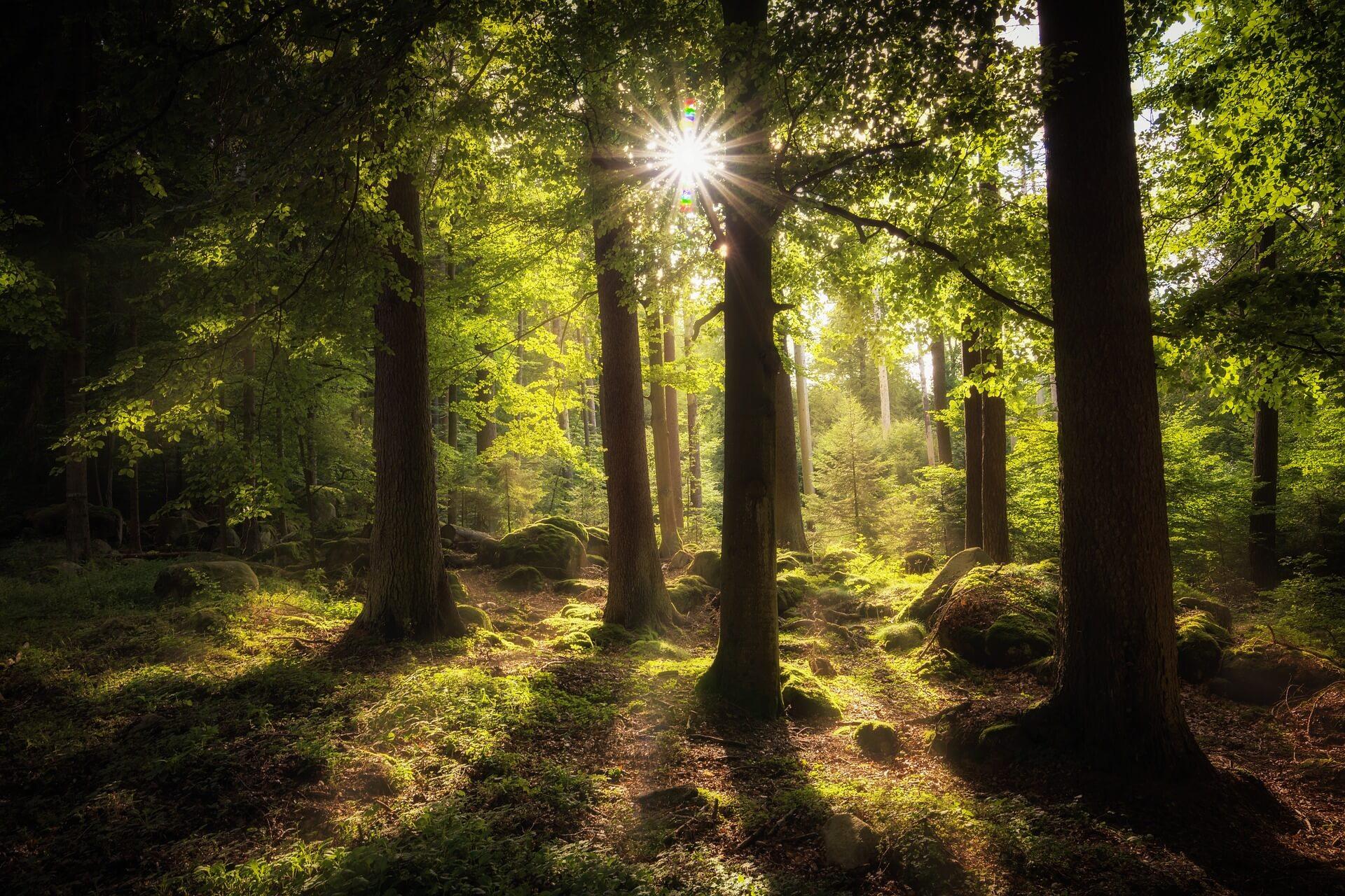 Waldbaden lichtdurchfluteter Wald